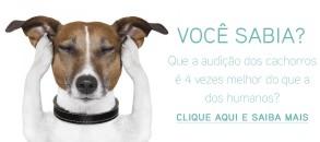 audicao-cachorro