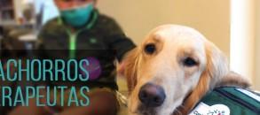 08_cachorroterapeuta
