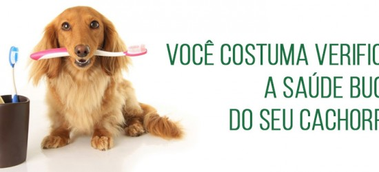 Você costuma verificar a saúde bucal do seu cachorro?