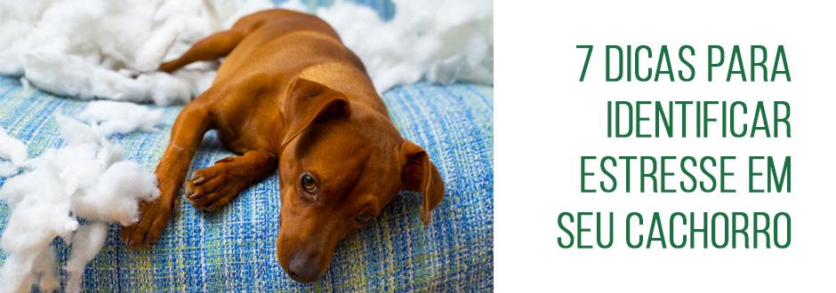 7 dicas para identificar estresse em seu cachorro