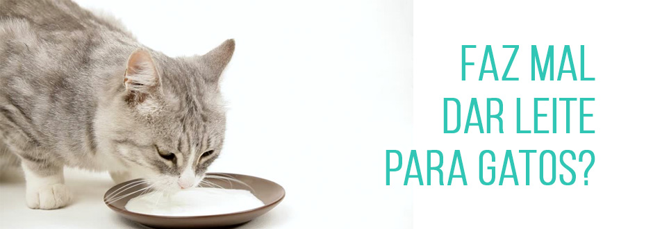 Faz mal dar leite para gatos?