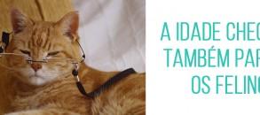 16_gatosidosos