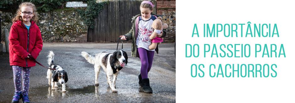 A importância do passeio para os cachorros