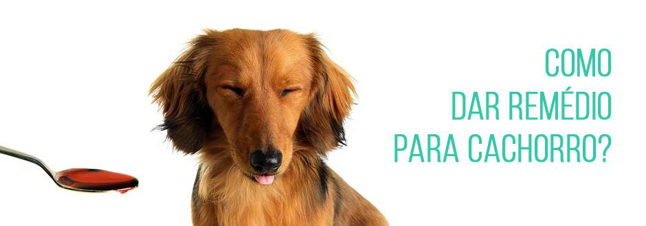 Como dar remédio para cachorro?