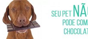 Chocolate pode causar envenenamento no seu cachorro