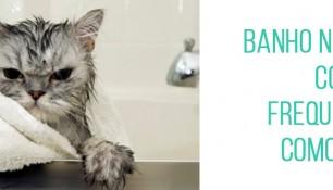 Como saber se o meu gato precisa de banho