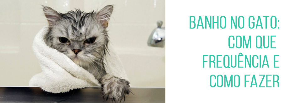 Banho no gato: com que frequência e como fazer