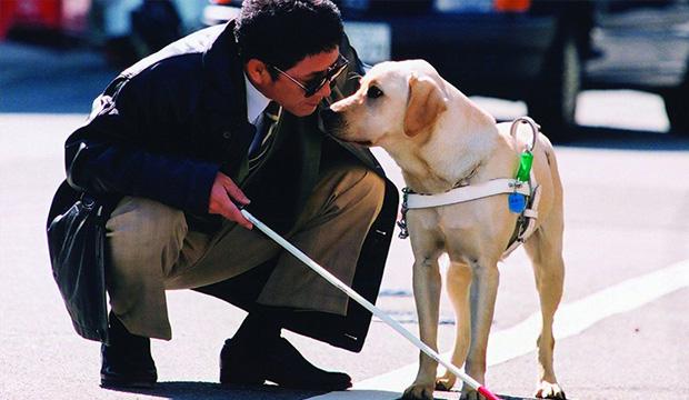 O cão-guia é treinado para ser os olhos de seu dono