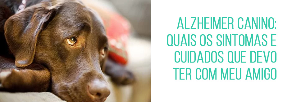 Alzheimer canino: quais os sintomas e cuidados que devo ter com meu amigo
