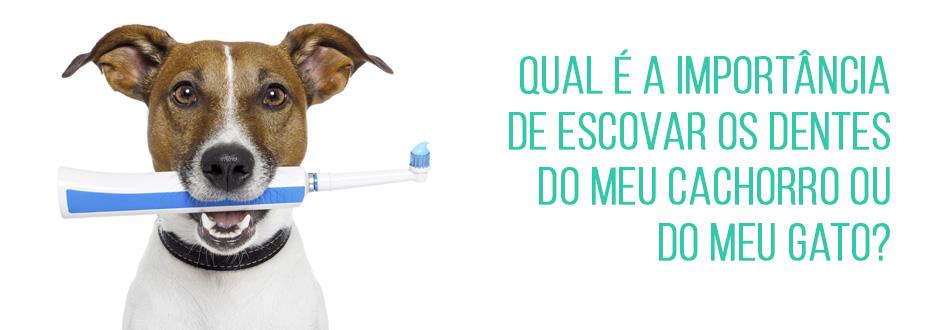 Qual é a importância de escovar os dentes do meu cachorro ou do meu gato?