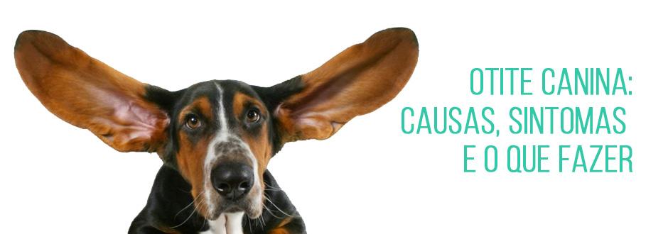 Otite canina: causas, sintomas e o que fazer