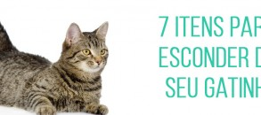 O que manter longe dos gatos