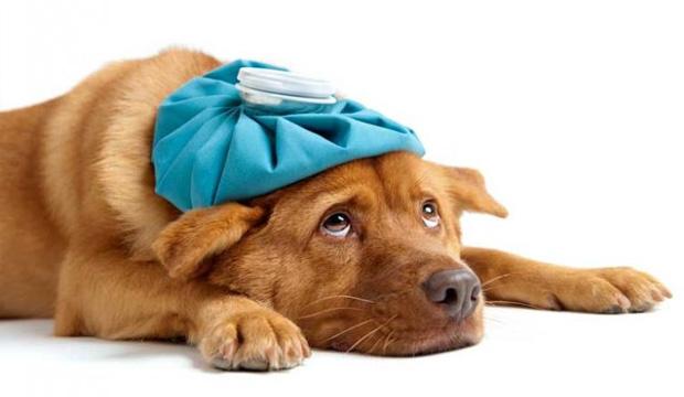 O Santé Laboratório Veterinário se dedica à saúde animal com uma equipe técnico-científica composta por veterinários qualificados e com vasta experiência em patologia clínica