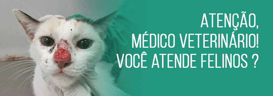 Atenção, médico veterinário! Você atende felinos ?