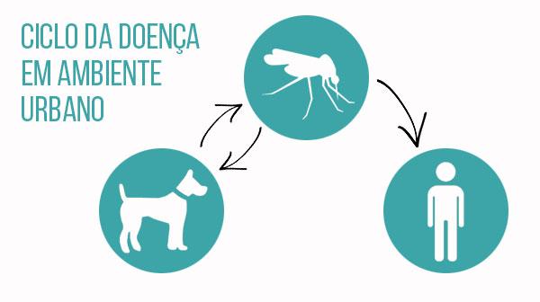"""O """"mosquito palha"""" é um dos transmissores da Leishmaniose Visceral"""