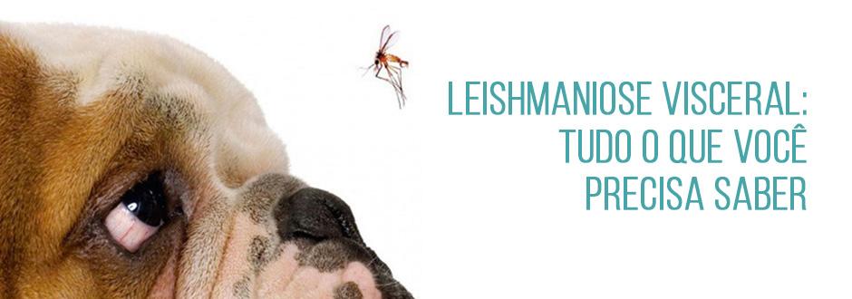 Leishmaniose Visceral: tudo o que você precisa saber