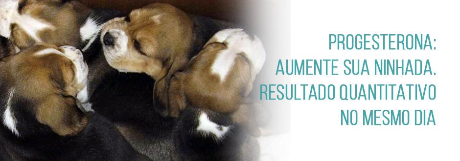 Progesterona: como esse exame pode ajudar a não perder o cio da sua cadela
