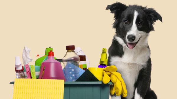 A intoxicação dos bichinhos não acontece só com a ingestão do produto de limpeza
